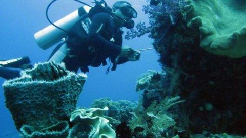 Raja Ampat dan Komodo Dinobatkan Destinasi Snorkeling Terbaik Dunia | Destinasi