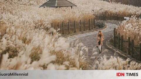 10 Wisata Bernuansa Alam ala KDrama, Cantik dan Bikin Sejuk di Hati!