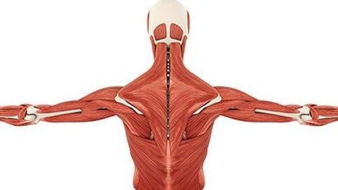 Kelainan pada Otot yang Memicu Terjadinya Distrofi Otot