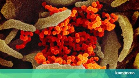 Ini Wujud Asli Virus Corona: Banyak Paku Mahkota