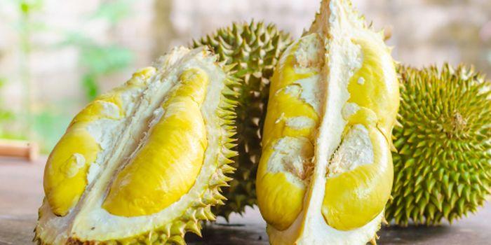 3 Jenis Durian Paling Populer Di Indonesia Endeus Tv