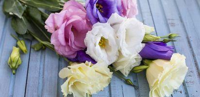 Aneh! 10 Bunga Termahal di Dunia. Seharga Mobil PORSCHE! 468bb3b720