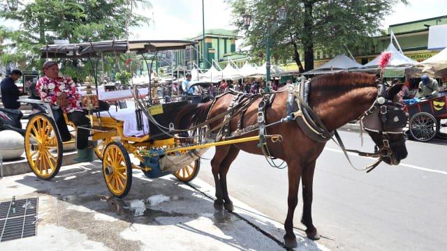 Kusir sedang menunggu penumpang bersama delman dan kudanya di Jalan Malioboro Foto: Helinsa Rasputri/kumparan