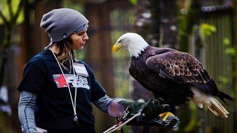 400 Gambar Burung Merak Dari Stik Gratis Terbaik