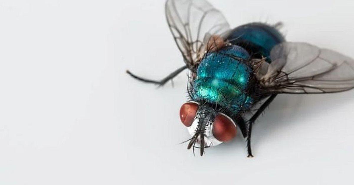 5 Contoh Hewan Vertebrata Dan Invertebrata Dengan Cara Gerak Yang Berbeda Materi Belajar Dari Rumah Tvri Sd Kelas 4 6 Kurio