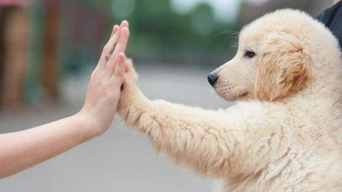Memelihara Anjing Kata Ilmuwan Bisa Memperpanjang Umur Pemiliknya
