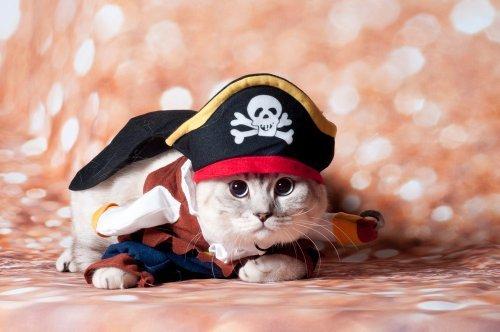 Jadikan Kucing Peliharaan Semakin Menggemaskan Dengan 9 Rekomendasi Baju Kucing Unik Ini 2019 Kurio