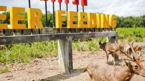 Sensasi Berbeda Wisata Di Penangkaran Rusa Maliran Deer