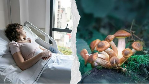 Ilmuwan Coba Gunakan Magic Mushroom Untuk Membangkitkan Pasien dari Keadaan Koma