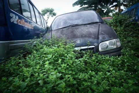 Salah satu mobil dipenuhi ilalang di tempat penampungan di Teluk Pucung, Bekasi Utara, Jawa Barat. Foto: Iqbal Firdaus/kumparan